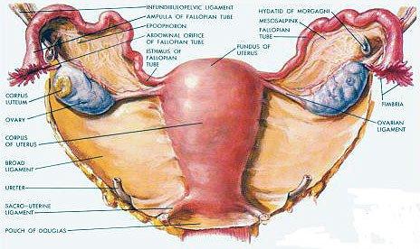 Cauze anatomice de infertilitate – Uter