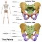 Cauze anatomice de infertilitate – Pelvis