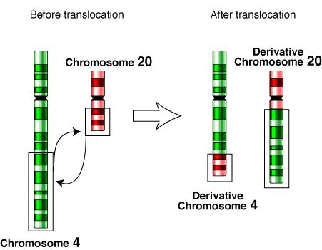 Cauzele genetice ale avortului spontan – Translocatii