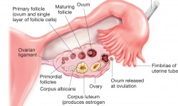 Metroragia (sangerarea uterina anormala)   menopauza.bucovinart.ro